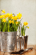 Gardening Tools Posters - Buckets Of Daffodils Poster by Christopher and Amanda Elwell