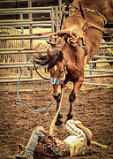 Rodeos Photo Posters - Bucking Poster by Caitlyn  Grasso
