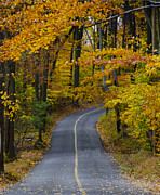 Bucks County Posters - Bucks County Road in Autumn Poster by Bill Cannon