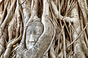 Statue Portrait Photos - Buddha Head in Tree Wat Mahathat Ayutthaya  Thailand by Fototrav Print
