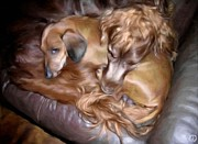 Dachshund Digital Art - Buddies by Gun Legler