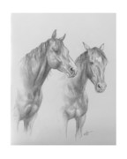 Wild Horse Drawings Posters - Buddies Poster by Kim Lockman