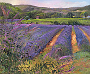 Rows Painting Posters - Buddleia and Lavender Field Montclus Poster by Timothy Easton