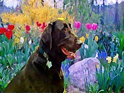 Chocolate Lab Digital Art Posters - Buddy in Heaven Poster by Anne Sterling