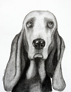 Dogs Drawings - Buddy by Lorraine Foster