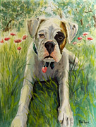 William Reed - Buddy The Boxer