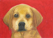 Puppies Pastels Posters - Buddy the Labrador Poster by Jeanne Fischer
