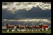 Budweiser Photos - Budweiser Clydesdales by Blake Richards