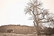 Sepia White Nature Landscapes Prints - Buffalo Breath Print by James Bo Insogna