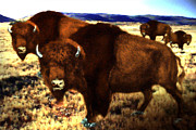 Old West Photo Originals - Buffalo Bull by Garry Staranchuk
