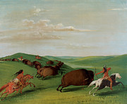 Lances Prints - Buffalo chase with Bows and Lances Print by George Catlin