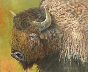 Bison Originals - Buffalo by Gloria S Schloss