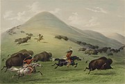 Western Western Art Prints - Buffalo Hunt Print by George Catlin