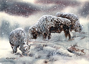 Jill Westbrook - Buffalo in Snow