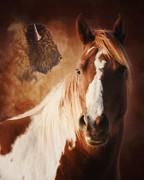 Buffalo Pony Print by Ron  McGinnis
