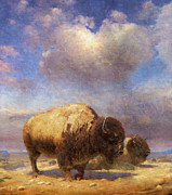 Bison Mixed Media Framed Prints - Buffalo Wallow Framed Print by Matt Hall