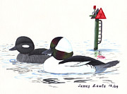 James Lewis Art - Bufflehead Pair on a Calm Afternoon by James Lewis