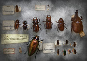Creepy Metal Prints - Bug Collector - The insect Collection  Metal Print by Mike Savad