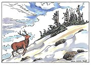 American West Drawings - Bull Elk at Timberline by Dawn Senior-Trask