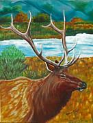 Lana Tyler - Bull Elk