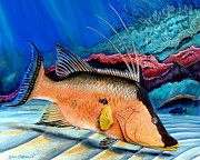 Scuba Paintings - Bull Hogfish by Steve Ozment