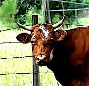 Farm Mixed Media Prints - Bull Print by Karen Sheltrown