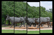 Bull Market Quadriptych Print by Christine Till