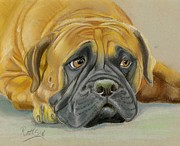 Bulls Pastels Framed Prints - Bull Mastiff Framed Print by Ruth Seal