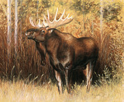 Bulls Pastels Framed Prints - Bull Moose Framed Print by Karen Cade