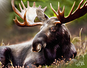Mike Oulton - Bull Moose