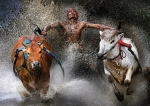 Bull Metal Prints - Bull race Metal Print by Wei Seng Chen