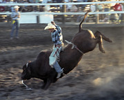Bull Riding Prints - BULL RIDING in the ROUGH Print by Daniel Hagerman