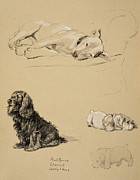 Bull-terrier, Spaniel And Sealyhams Print by Cecil Charles Windsor Aldin