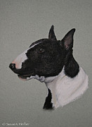 Breed Study Pastels - Bull Terrier by Susan Herber