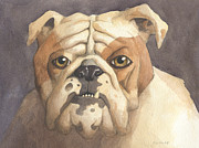 English Bulldog Paintings - Bulldog by John Holdway