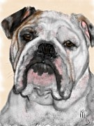 Lois Ivancin Tavaf - Bulldog