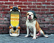 Skate Photo Originals - Bulldog Melt Down by Kathy Sidjakov