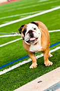 Tammy Abrego - Bulldog on football field