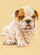 Victor Powell - Bulldog Puppy Portrait