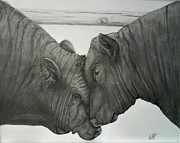 Black Angus Drawings Prints - Bullheaded Print by Adrienne Giljam