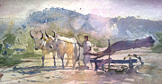 Mohan Watercolours - Bullock
