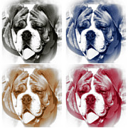 Dog Pics Photos - Bully Colors by John Rizzuto