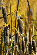 Steve Rowland - Bulrushes In The Fall
