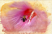 Stamen Digital Art Acrylic Prints - Bumble Bee Bliss Acrylic Print by Betty LaRue