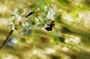Bumble Bee Eating Sweet Nectar Print by Dan Friend