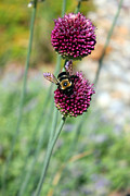 Carolyn Stagger Cokley - Bumblebee