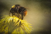 Foot Posters - Bumblebee Poster by Erik Brede