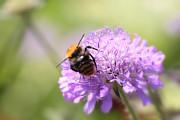 HJBH Photography - Bumblebee