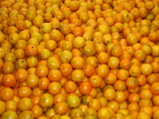 Tangerines Photos - Bumper Crop by Jon Blumenaus