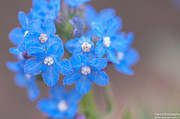 Gandz Photography - Bunch Of Blue
